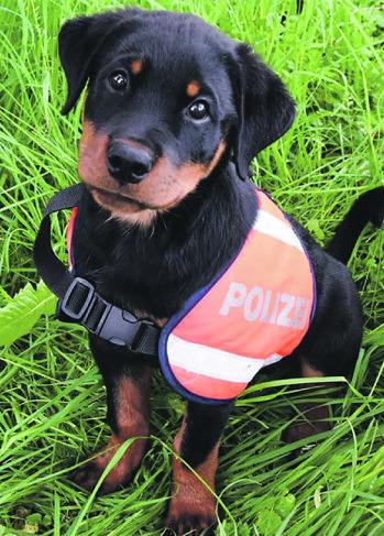 Vor knapp einem Jahr stellte die Kantonspolizei Schwyz