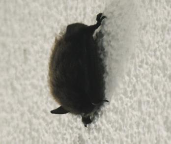 Unscheinbar und höchstens 5  Zentimeter gross – und dennoch  auf der weissen Wand unübersehbar:  So hing die