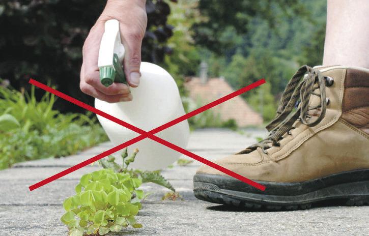 Unkrautbekämpfung ist auch ohne  schädliche Herbizide möglich