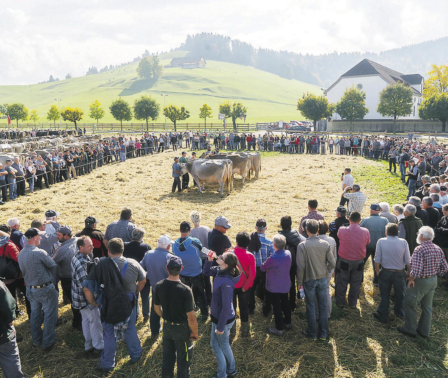 Viehzuchtverbände rufen zum  Verzicht der Viehschauen auf