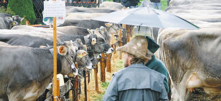 6000 Tiere bleiben auf ihren Höfen