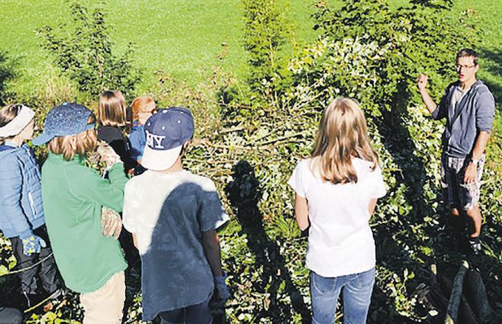 Primarschüler bauten ein  «Zauneidechsen-Schloss»