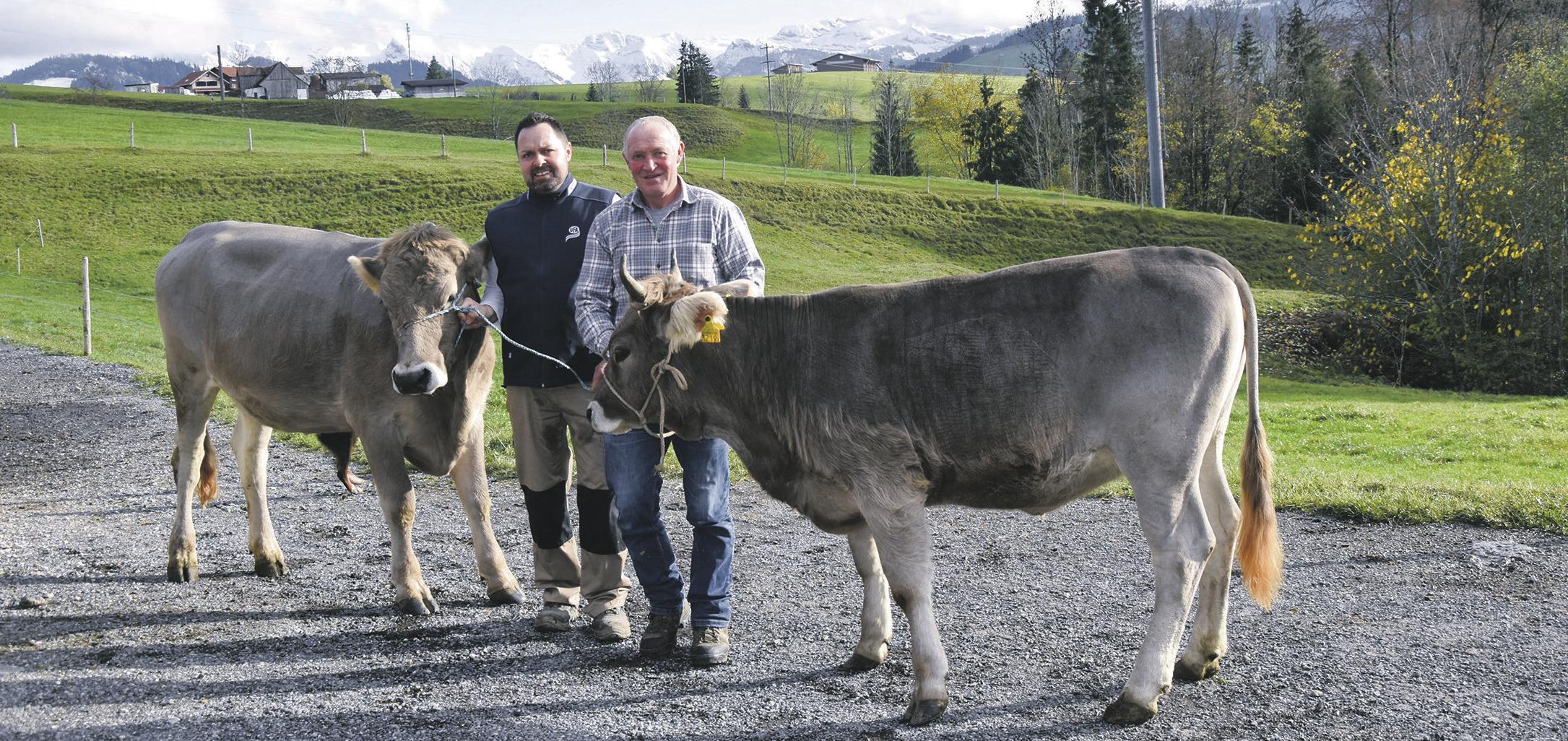 Wie zwei Rinder und zwei Kühe  an den Genfersee reisen