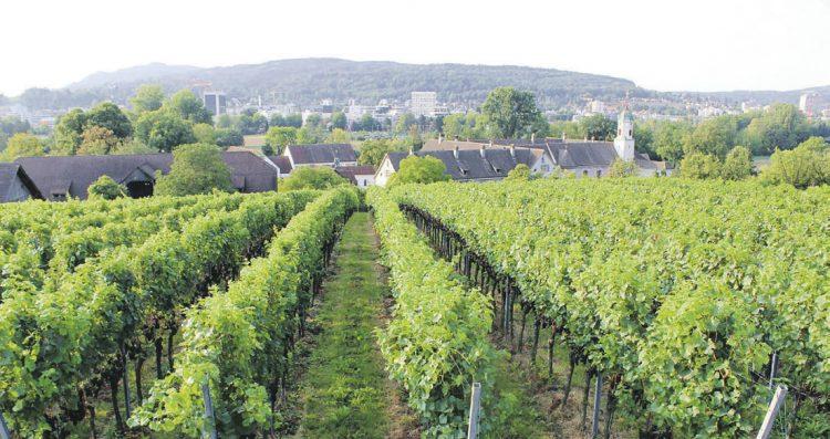 Weinbau Kloster Fahr und Klosterkellerei  Einsiedeln – gemeinsam in die Zukunft