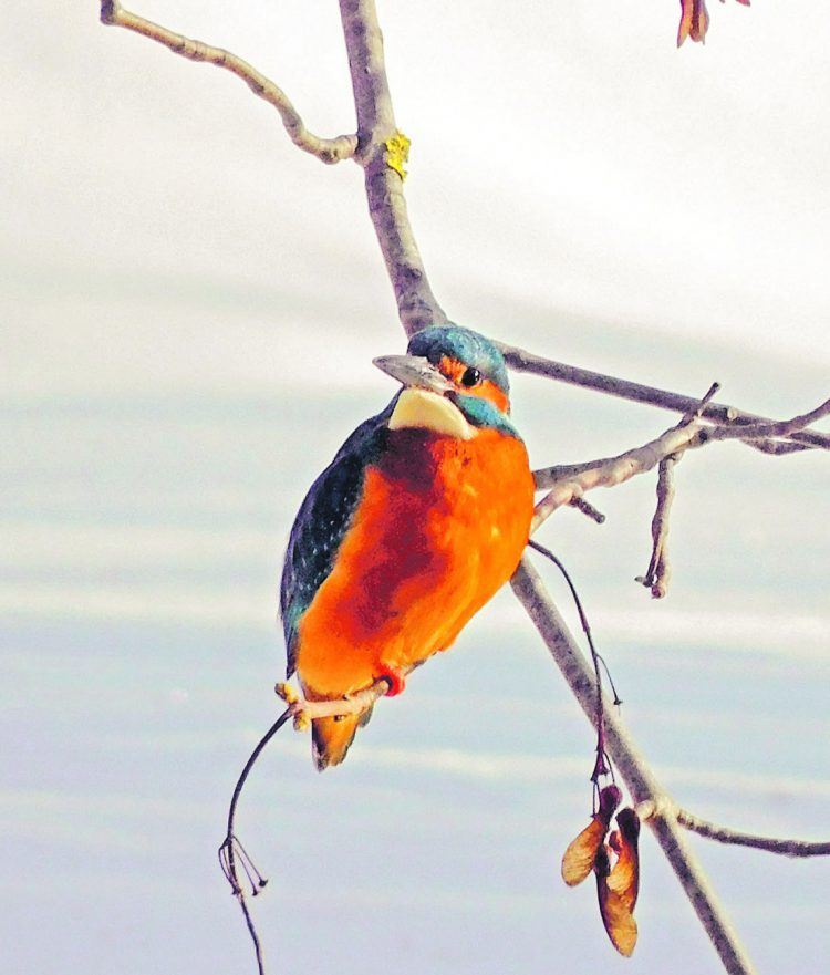 Mit viel Geduld seltenen Vogel fotografiert