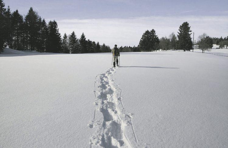 Zu viele Waldgänger weichen  von markierten Wegen ab