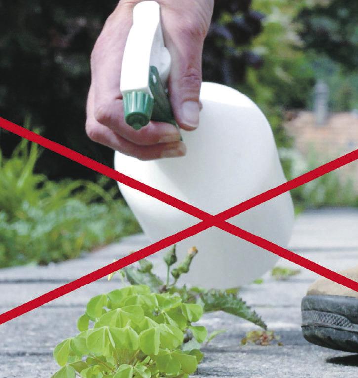 Herbizide schädigen Umwelt