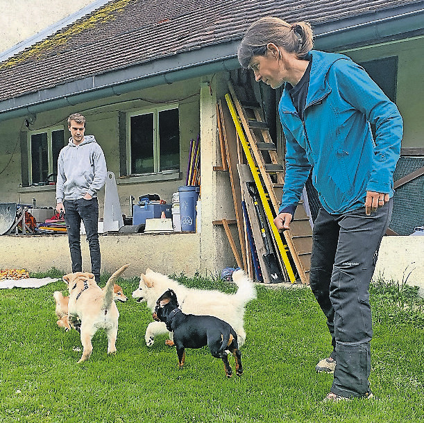 Es gibt 8518 Hunde im Kanton Schwyz