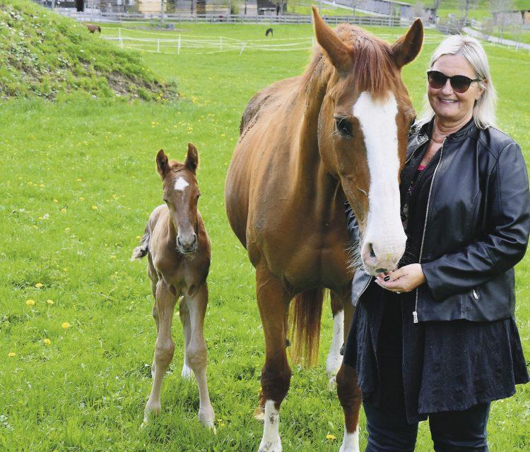 «Arista hat zum achten Mal  ein Fohlen geboren»