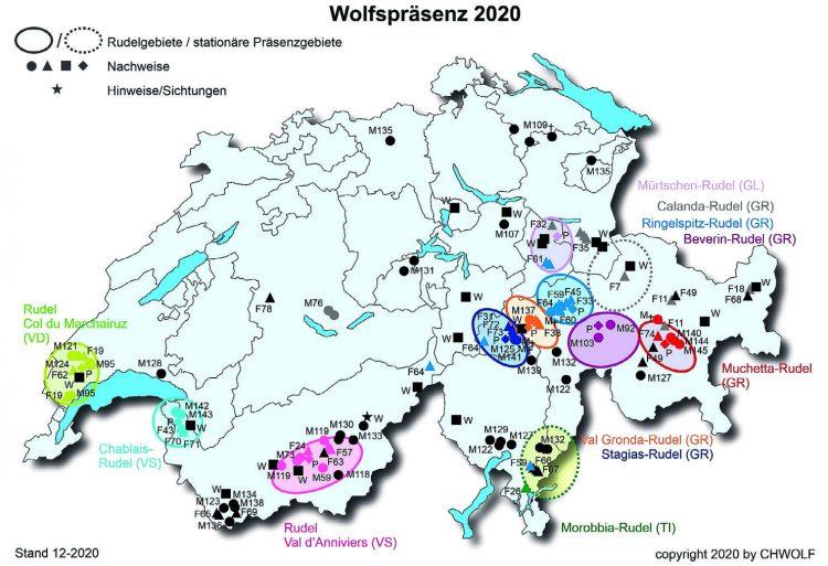 Bald bildet sich das erste  Schwyzer Wolfsrudel
