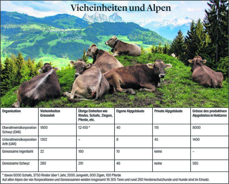 16'500 Tiere weiden auf Schwyzer Alpen