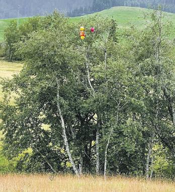 Dieser Baum im Hochmoor von Rothenthurm wurde nicht für eine Geburtstagsparty geschmückt.  Er wurde zum zufälligen