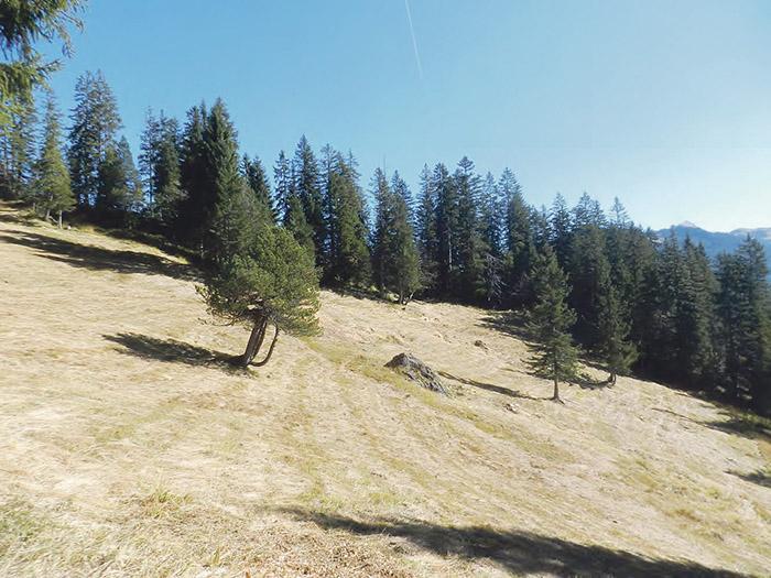 Feuchtwald mit grosser Artenvielfalt