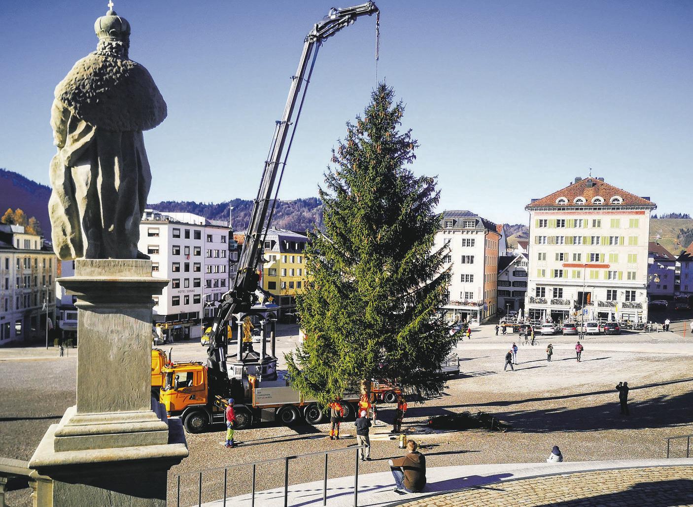 Der Christbaum landet auf dem Klosterplatz
